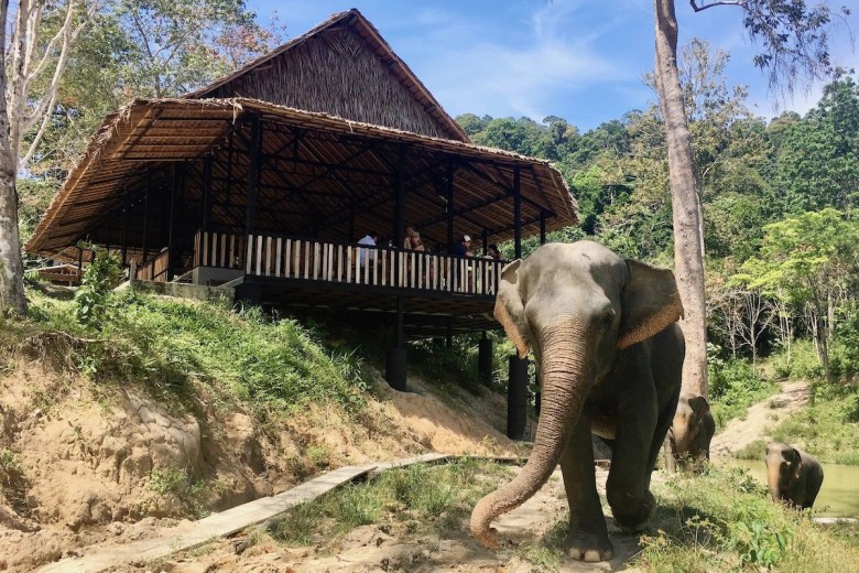 A beautiful elephant walking in the elephant sanctuary in Phuket Thailand. In the back is a wooden look out point from where tourist can admire the elephant.