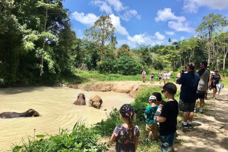 In the elephant sanctuary in Phuket the elephants are taking a bath while tourists are enjoying the view