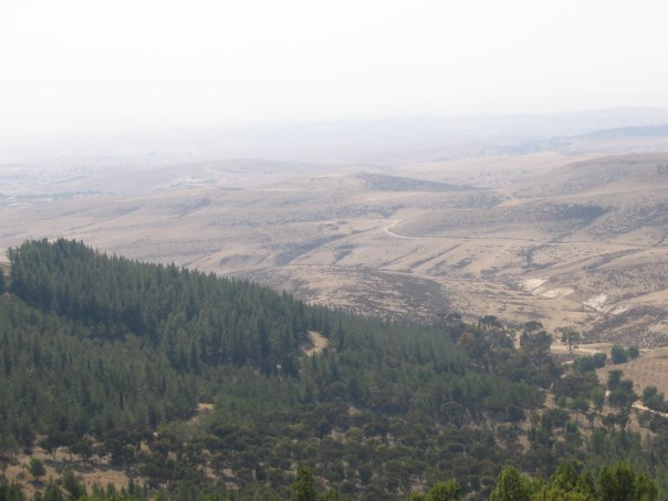 "This is the Yatir Forest, the largest planted forest in Israel. ""Yatir Forest, Israel no.1"". Licensed under CC BY-SA 3.0 via Wikimedia Commons."