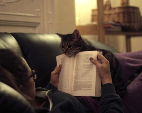 donna con gatto che legge