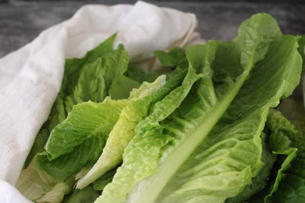 lettuce for Romaine Salad with Pears, Blue Cheese and Pecans
