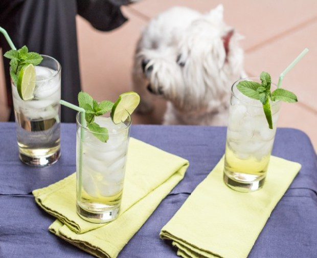 Prosecco and Elderflower Spritzer with Chloe the dog