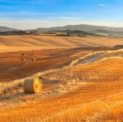 Montironi d'Arbia - Siena - Toscana