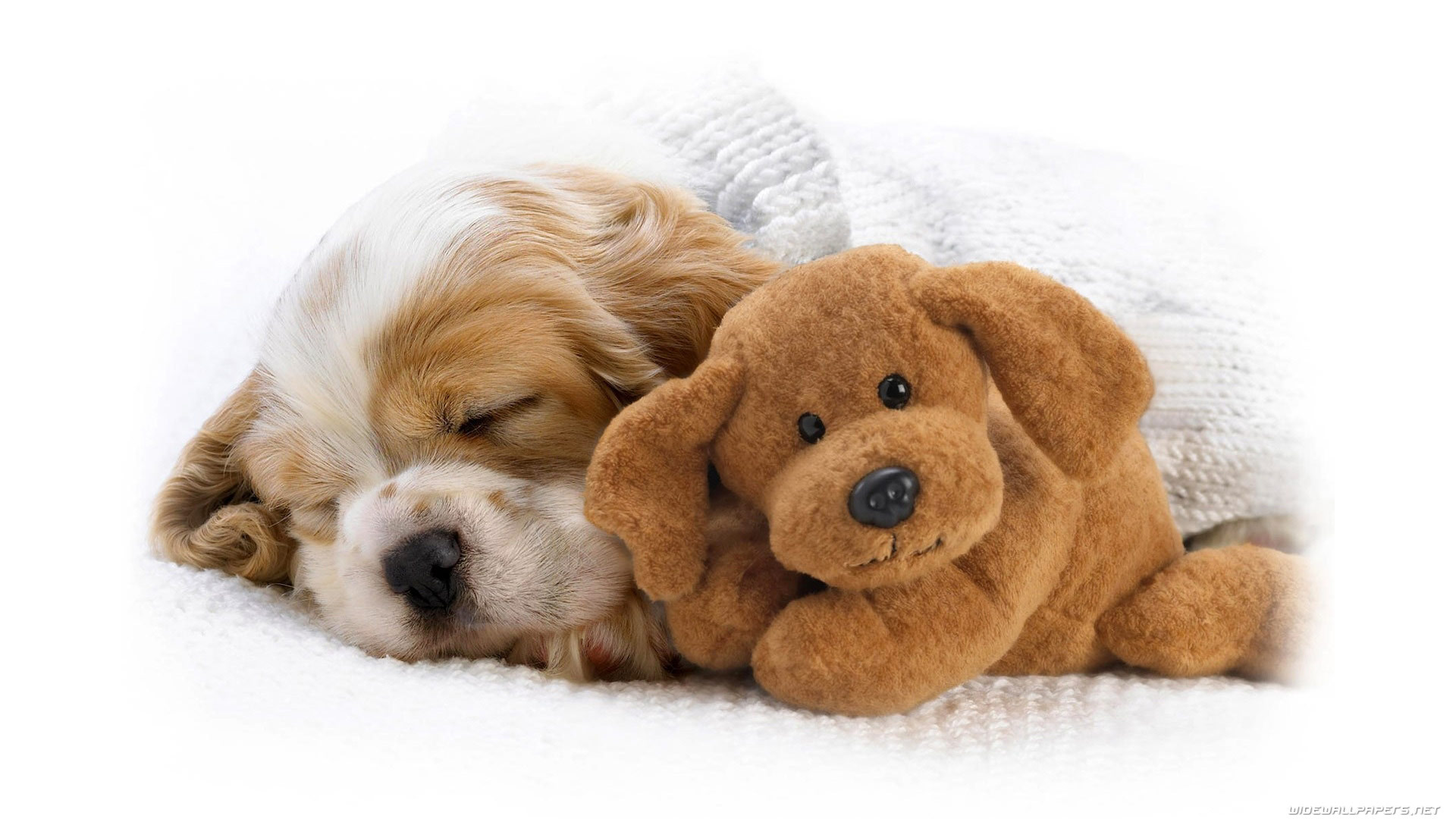 Cute Puppy Wallpapers Those Are Perfect To Make Your Mood Happy - Let Us Publish