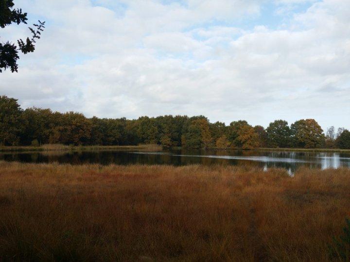 Natuurgebied Kampsheide.