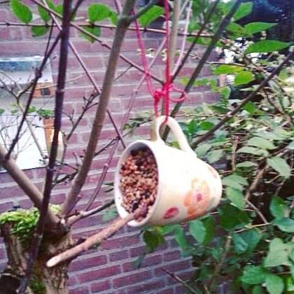 DIY: kopje vogelvoer maken - bird feeder cup