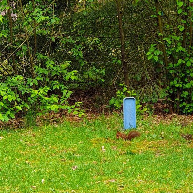 eekhoorn op Landal Rabbit Hill