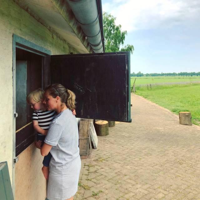 kijken naar de dieren bij boerderij De Lieve Wies