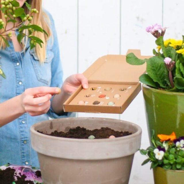 De leukste cadeau ideeën voor de juf of meester. Bloompost heeft een leuk brievenbuscadeau: zaaibommetjes. Deze bolletjes stop je in de grond, een tijdje later groeien er biologische wilde bloemen.