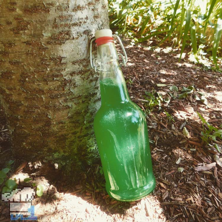 Finished recipe for Energizing Elixir from the Legend of Zelda Breath of the Wild game series.