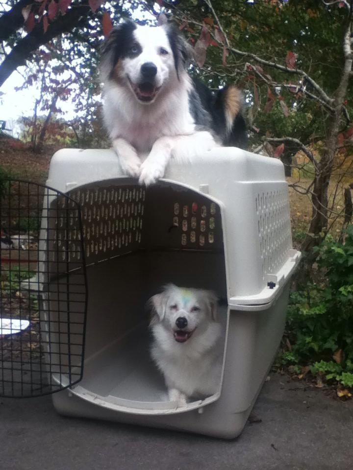 Positive crate training can make the kennel your dog's favorite place to be.