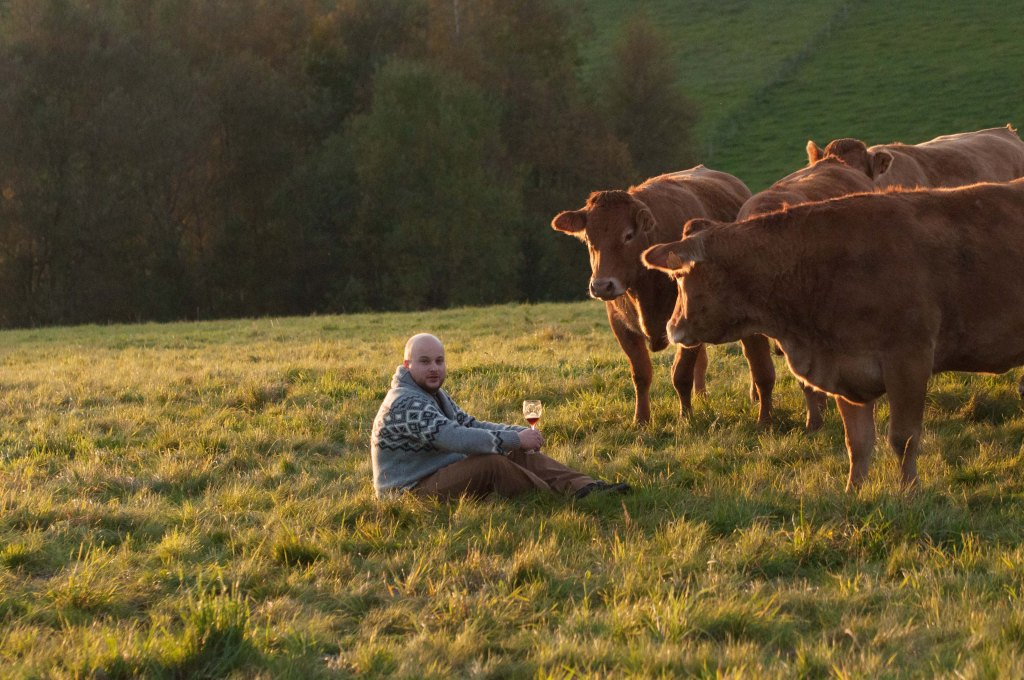 Le grand Chef Thomas Troupin au milieu des vaches de la Limousin Farm