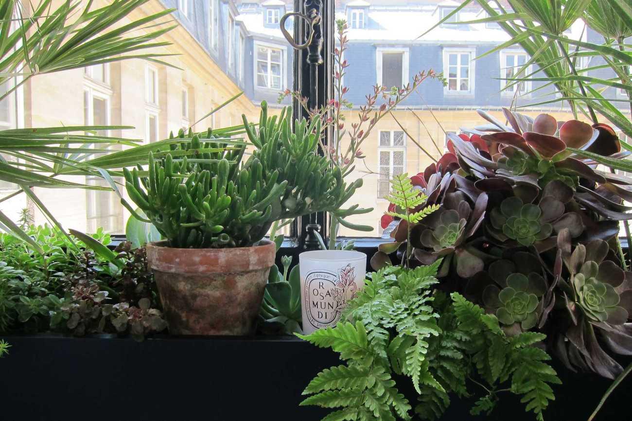 Décoration végétale Le Vert à Soi. Diptyque