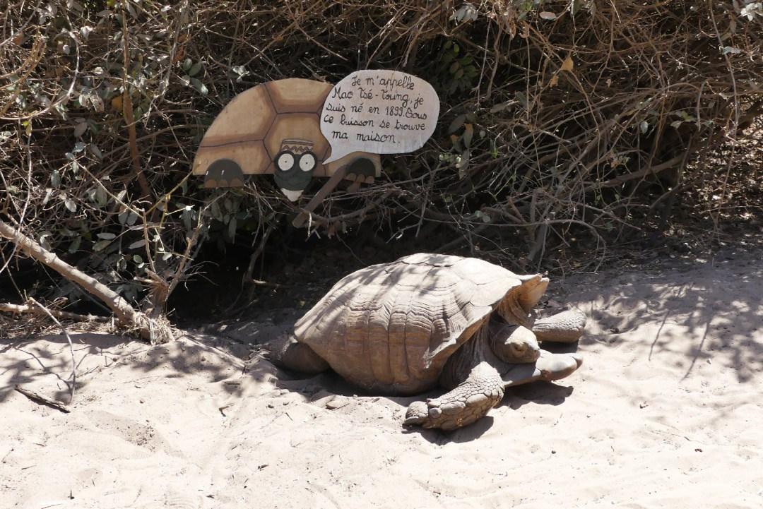 Tortue centenaire du village des tortues de Noflaye