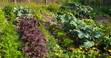 12 Ideas for your Spring Garden