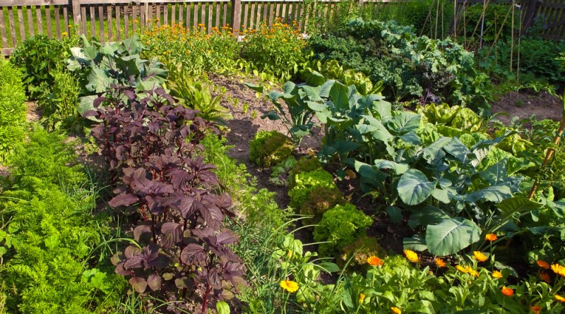 plan your pacific northwest garden