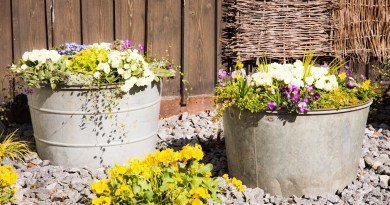 Vintage tin buckets filled with spring flowers in the garden