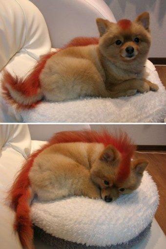 Firefox 2.0 - Live