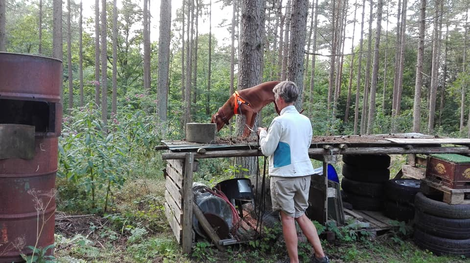 Kukie laver Nosework i skoven
