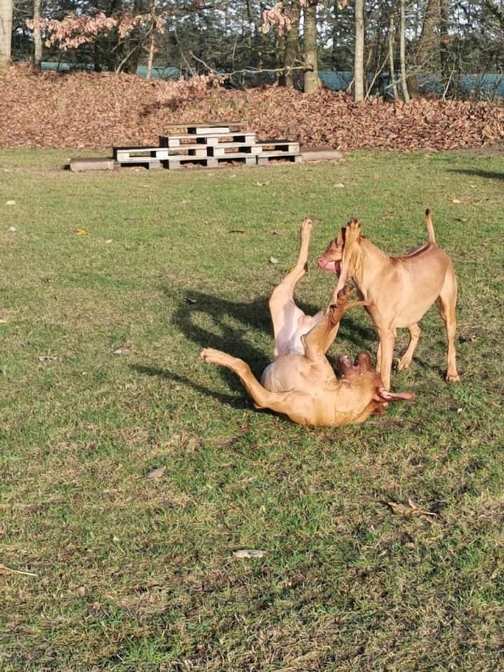 musa og obi leger