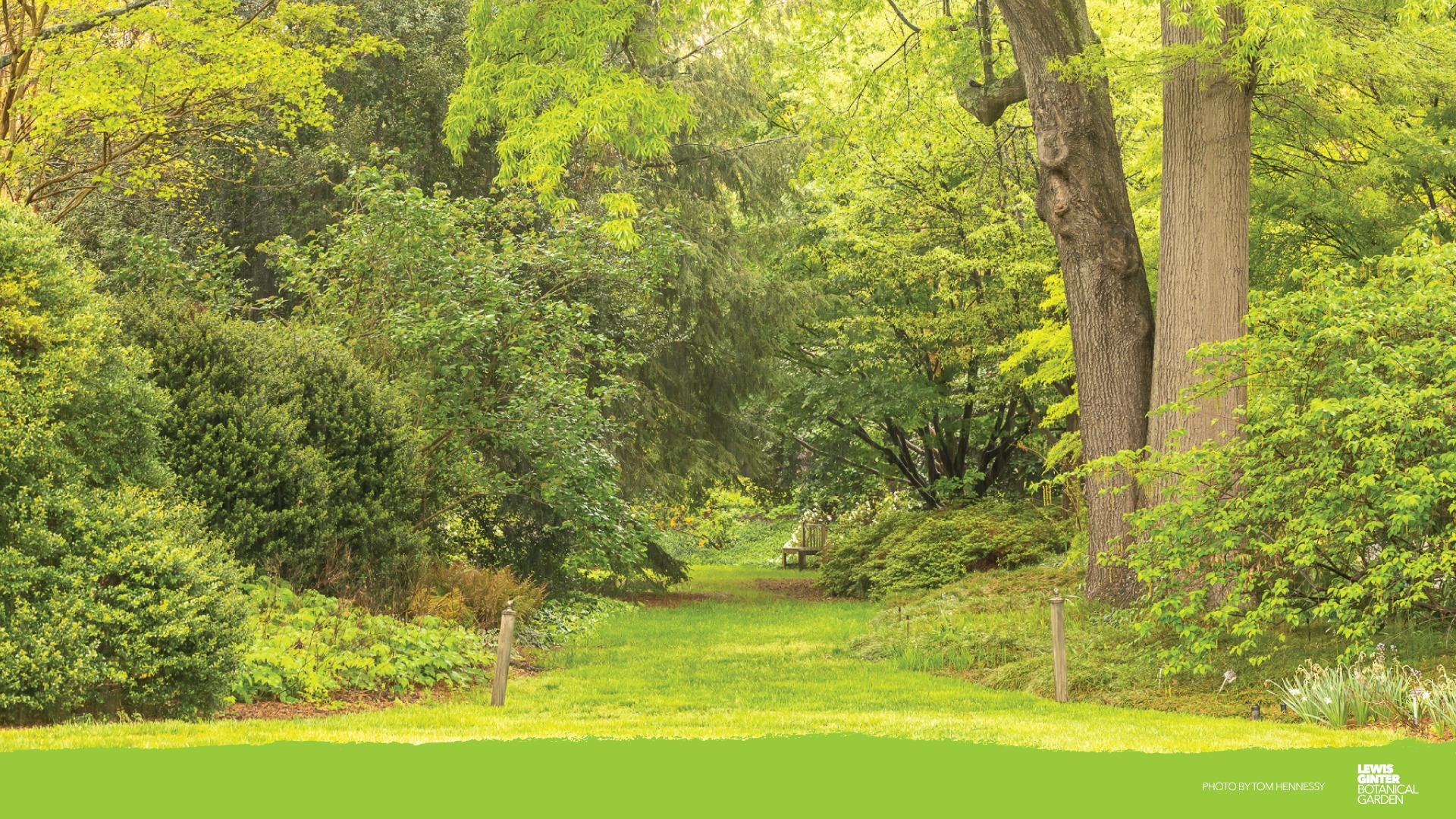 Garden Zoom Background