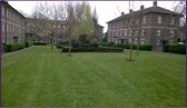 Removal of ivy and weeds at Ryculff Estate