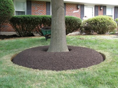 Mulch Your Trees