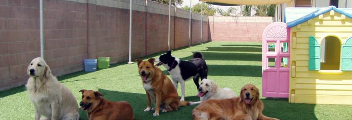 LexPets: Dog Daycare, Dog Boarding, Dog Grooming, Dog Training, Dog Food