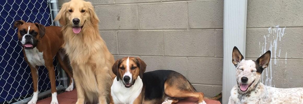 Dog daycare and dog boarding