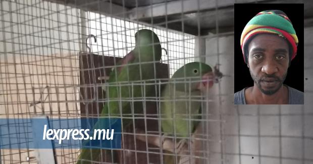 Un présumé voleur d'oiseaux et un receleur arrêtés