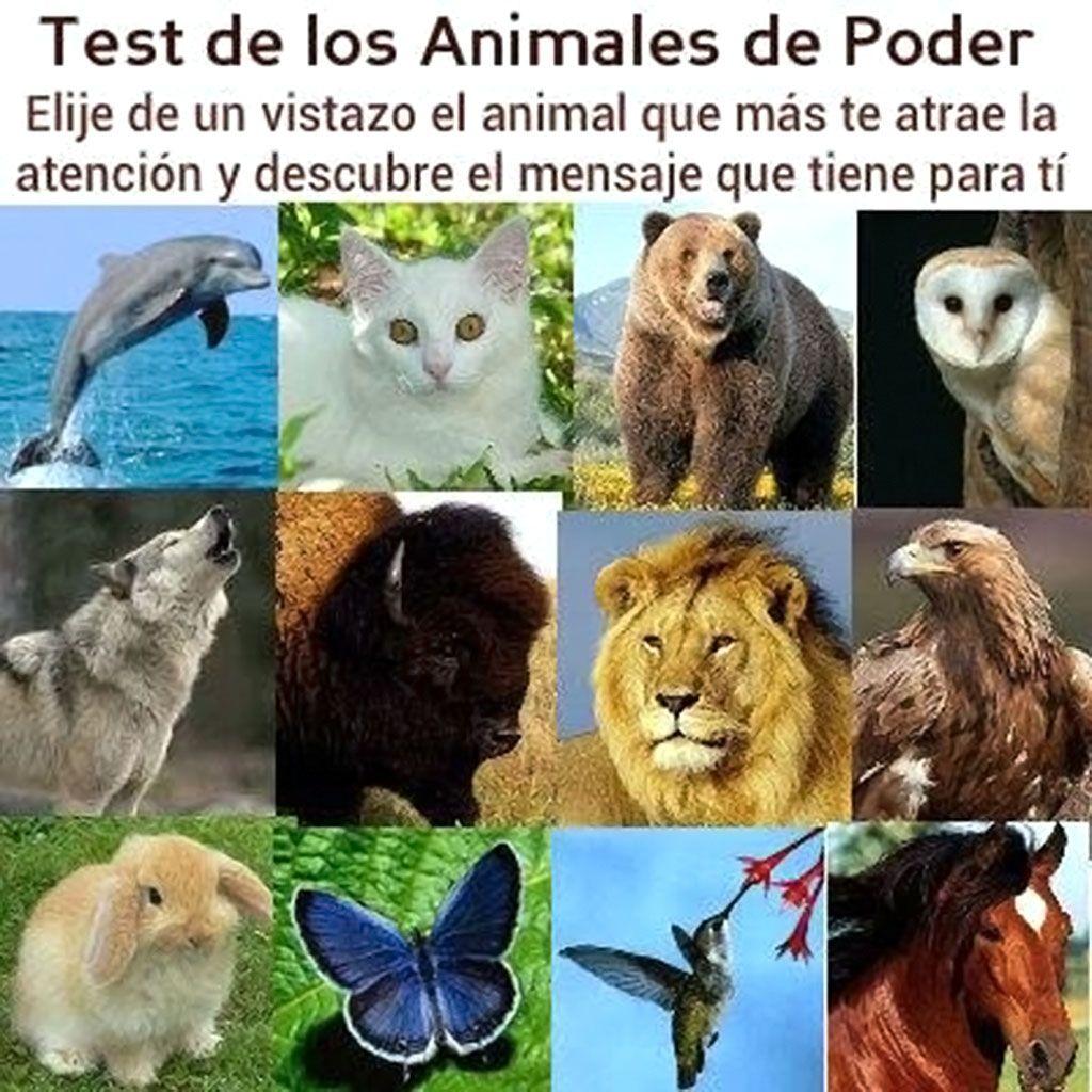 Test de Personalidad de los Animales de Poder