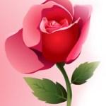 Poema -Una rosa