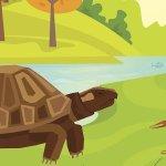 Fábula  – El escorpión y la tortuga
