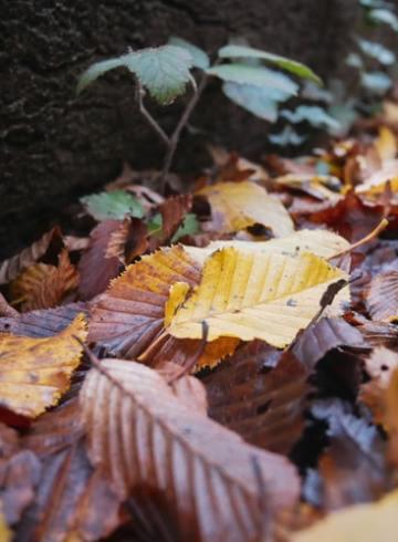 la musique de l'automne