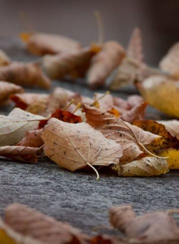 mark-timberlake unplash feuilles mortes