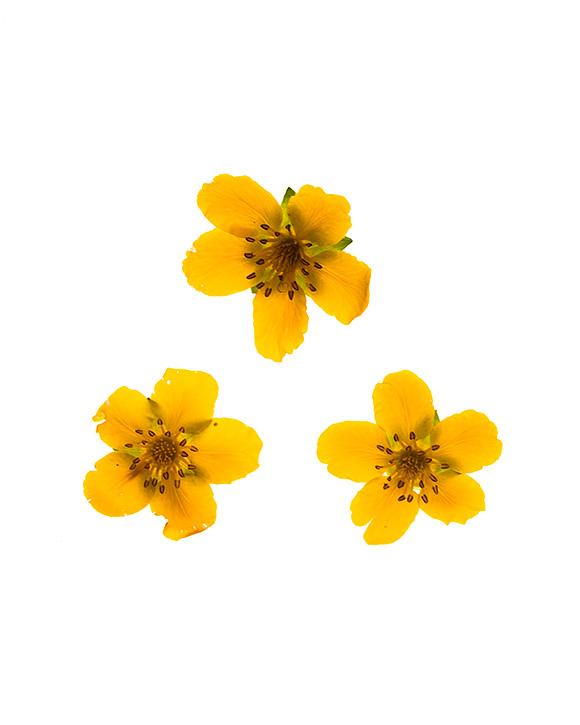 Untitled flower #3 - © Fotograf Lars-Göran Norlin