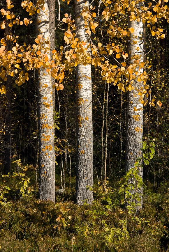 Tre © Fotograf Lars-Göran Norlin