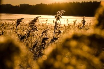 Nydala © Fotograf Lars-Göran Norlin