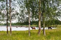 Bälinge Fotograf Lars-Göran Norlin