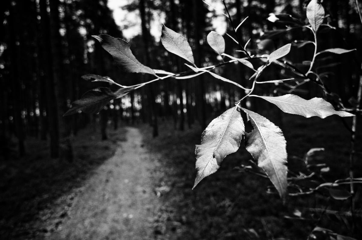 Stig i skogen, Fotograf Lars-Göran Norlin