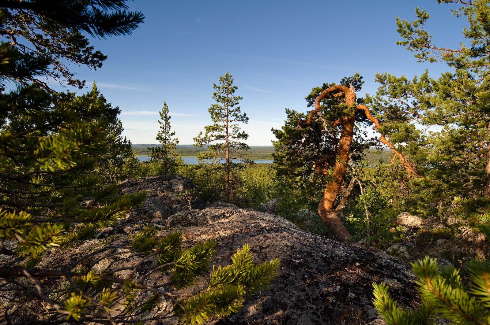 Bälingeberget. Fotograf Lars-Göran Norlin
