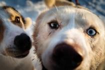Hundspann 12
