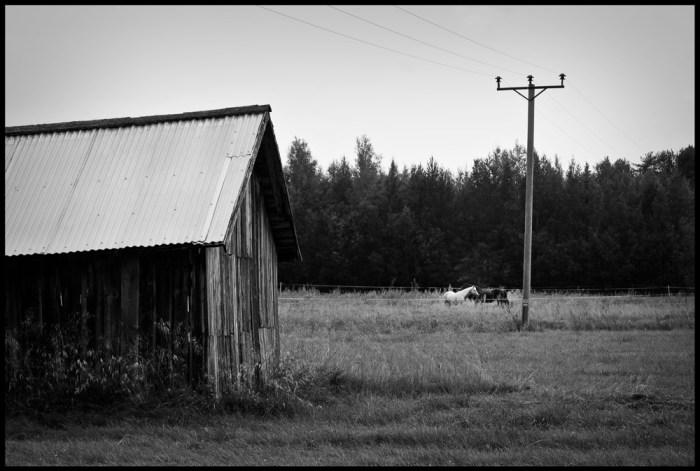 Hästarna, Bälinge Fotograf Lars-Göran Norlin