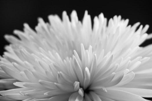 Blomma. Fotograf Lars-Göran Norlin