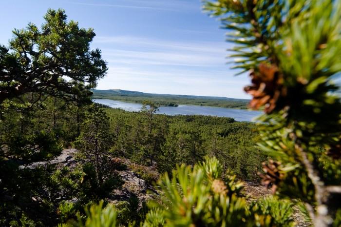 Träsket, Bälingeberget, Luleå. Fotograf Lars-Göran Norlin
