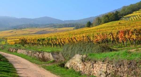 plantation vins Bourgogne