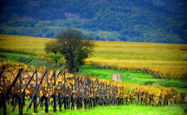 Vignoble de France