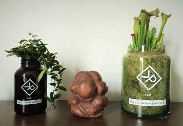 Vitamin Plant pour Homme