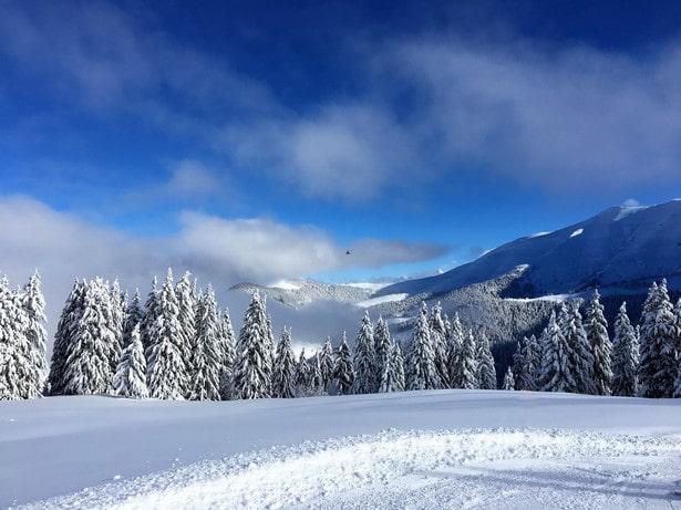Skiez entre les sapins sur les pistes de Megève