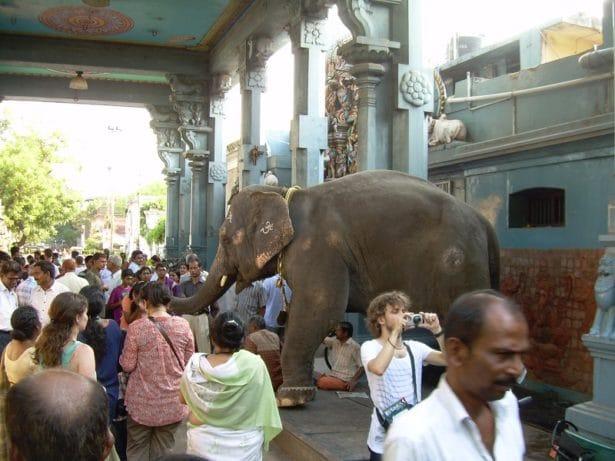 L'éléphant de Pondichery